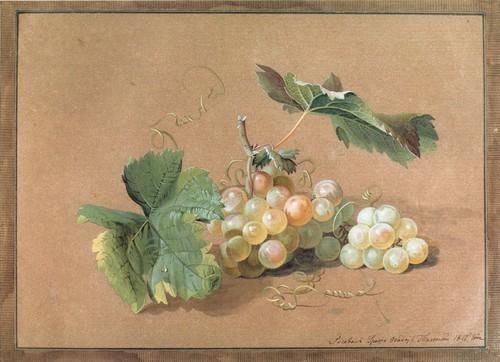 Ветка винограда. 1817