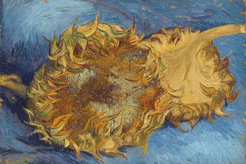 Два срезанных подсолнуха. 1887 год.