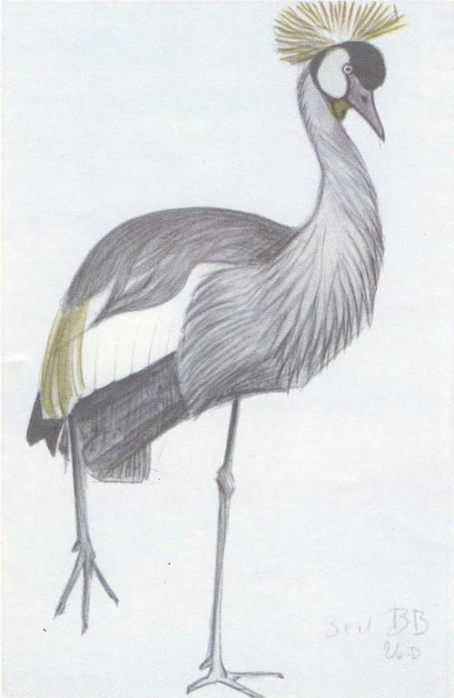 В. Ватагин. Венценосный журавль. Акварель, карандаш. 1926.