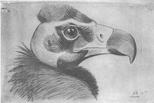 В. Ватагин. Голова грифа. Карандаш. 1925.