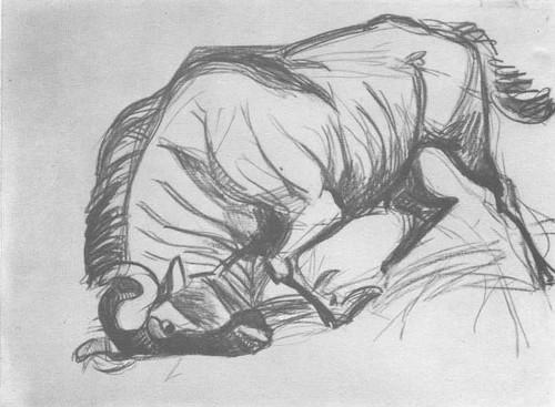В. Ватагин. Рассерженная антилопа Гну. Карандаш. 1927.