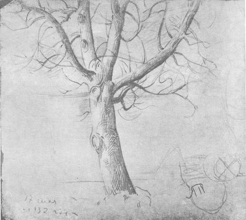 Т. Яблонская. Дерево. Карандаш. 1932.