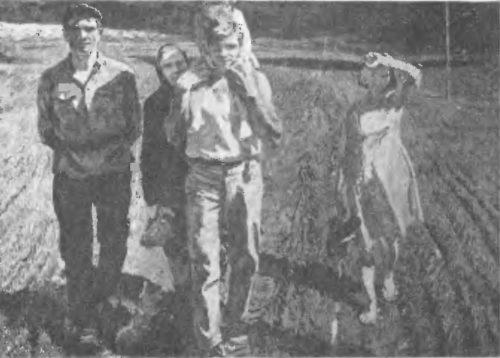 А. Ткачев, С. Ткачев. На мирных полях. Мае ло. 1964.