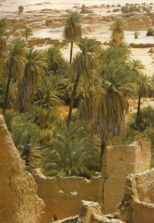 Айр и Тенере. В оазисах Айра немало разрушенных деревень; некоторые здешние постройки относятся к XI-XIV вв., но в основном жители их покинули в последние 200 лет.