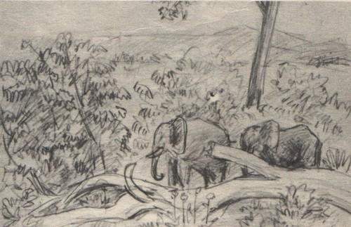 В. Муцетони.Слоны. Карандаш. 1977.