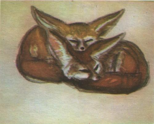 В. Муцетони. Лисички фенёк. Акварель. 1972.