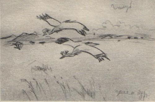 В. Муцетони. Полет венценосных журавлей. Карандаш. 1977.