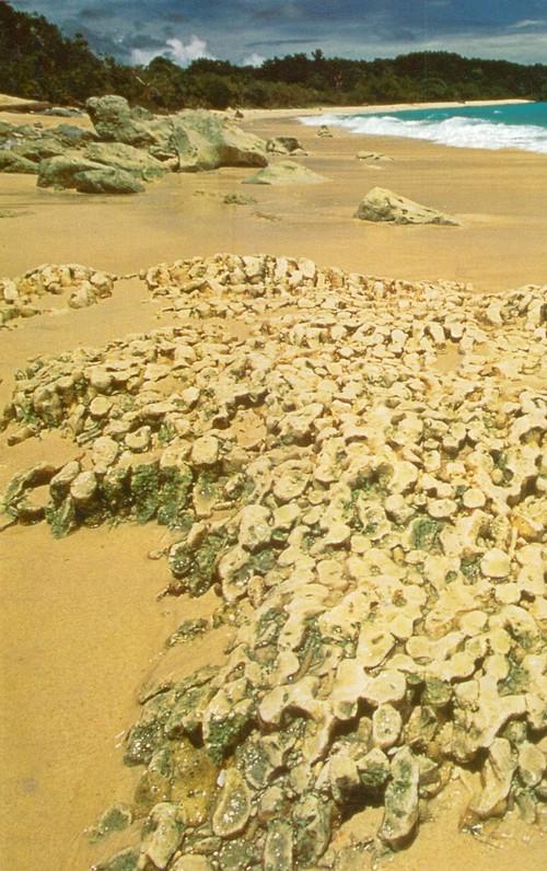 Уджунг-Кулон. Мощные приливно-отливные течения обеспечивают быструю смену водных масс в Зондском проливе; вода здесь прозрачная, богатая кислородом и питательными веществами — оптимальные условия для роста коралловых рифов.