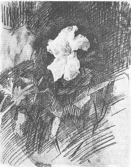 М. Врубель. Белая азалия. Черный и графитный карандаш, акварель. 1886—1887.