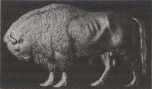 П. Клодт. Кормовое украшение корвета «Зубр». 1856.