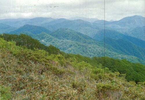 Сираками. Япония вдалеке от перенаселенных областей и индустриальных районов тихоокеанская витрина «острова» покрытая лесами гористая страна. Горы занимают здесь три четверти, а леса две трети территории.