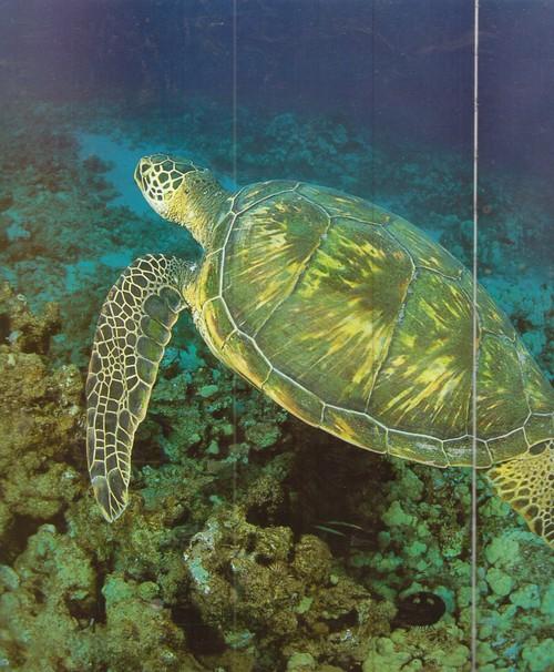 Коралловые рифы Белиза